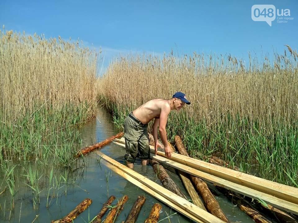 В Одесской области строят остров для пеликанов (ФОТО), фото-1