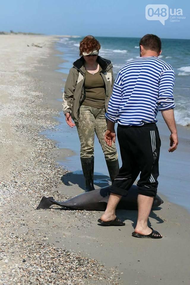 В Одесской области зафиксировали гибель дельфинов, - ФОТО, фото-3