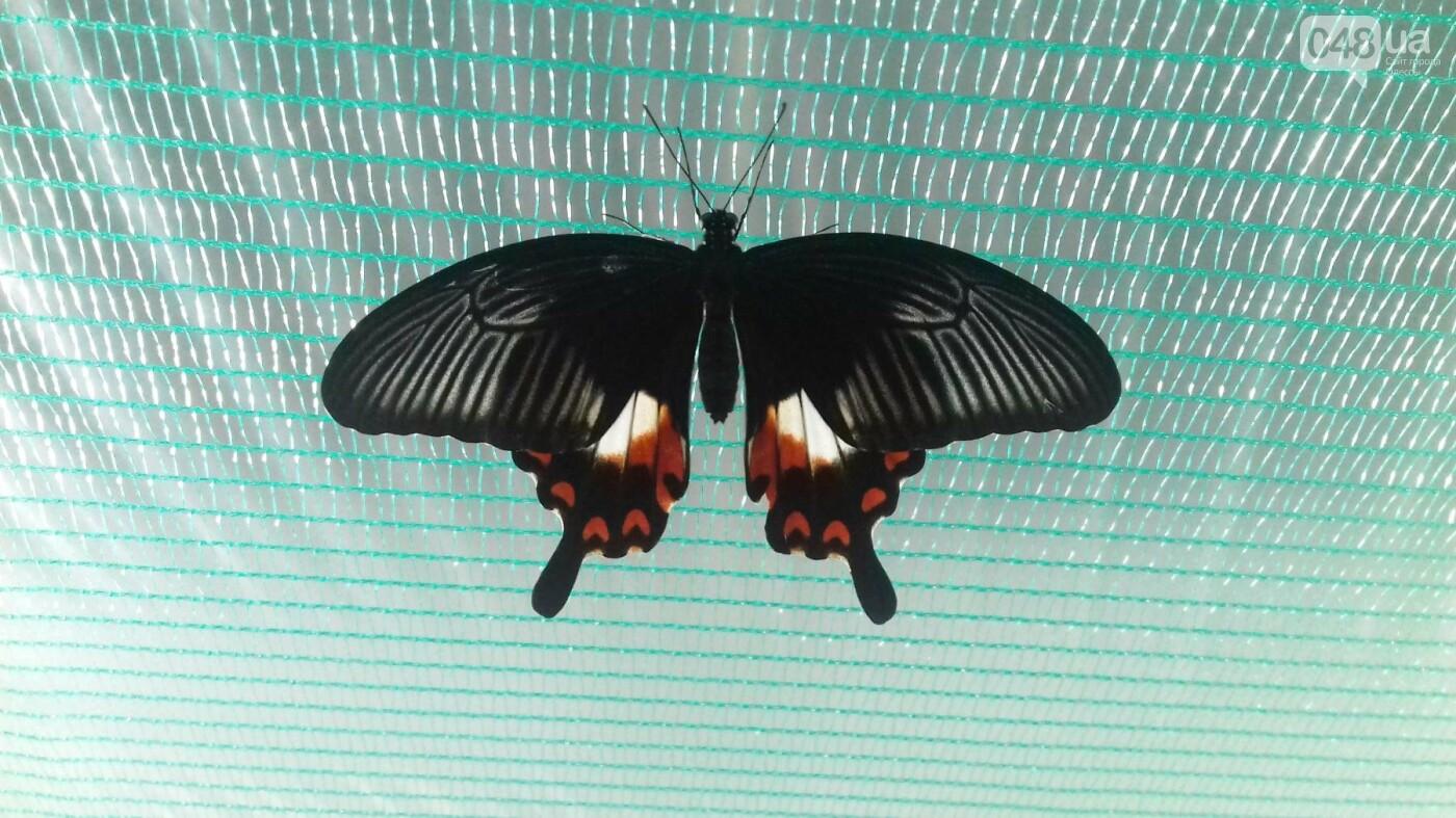 Выставка живых тропических бабочек в Одессе, фото-2