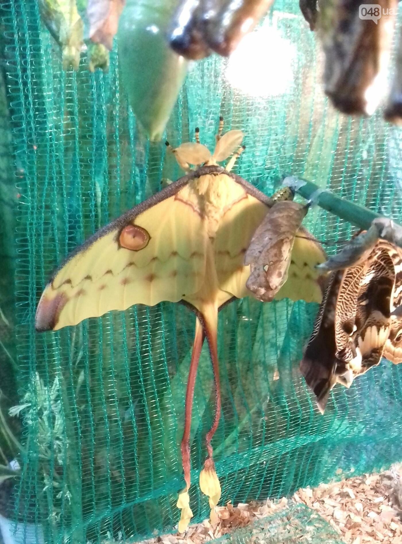 Выставка живых тропических бабочек в Одессе, фото-3