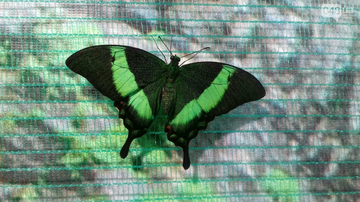 Выставка живых тропических бабочек в Одессе, фото-8