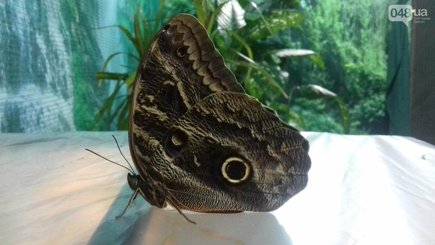 Выставка живых тропических бабочек в Одессе, фото-6