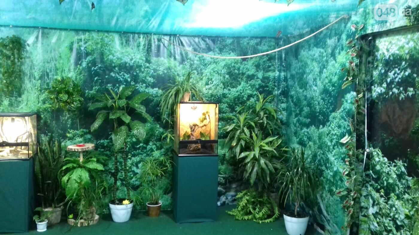 Выставка живых тропических бабочек в Одессе, фото-4