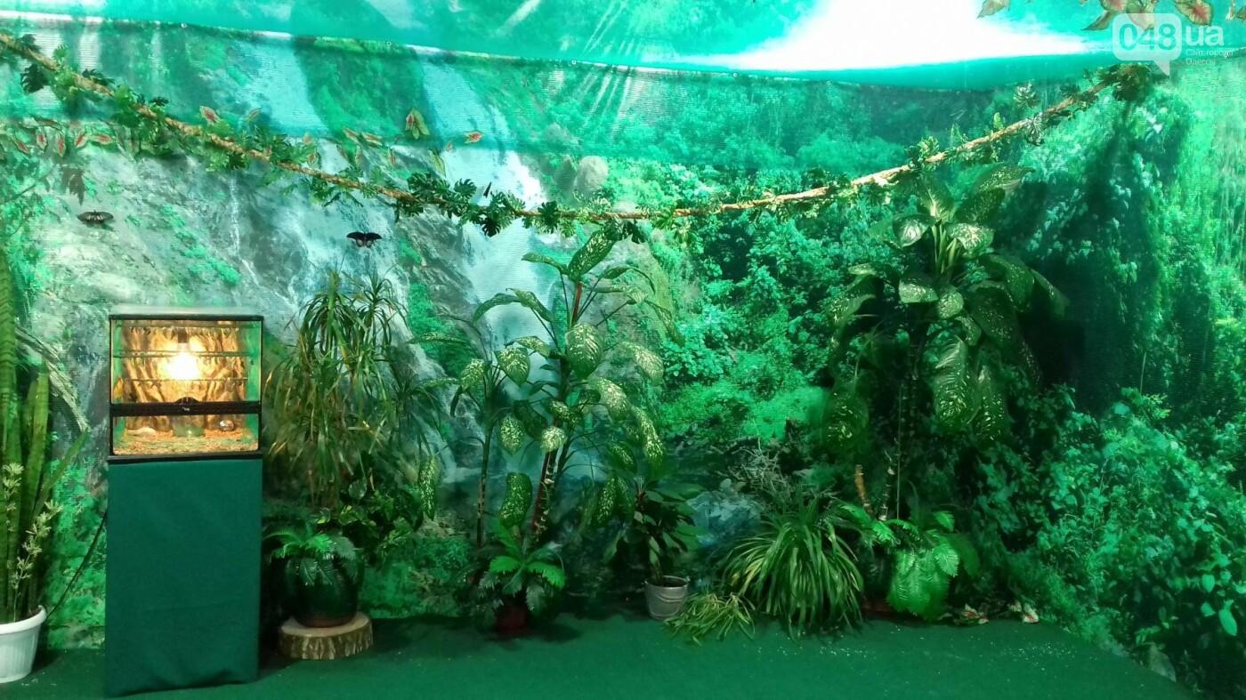 Выставка живых тропических бабочек в Одессе, фото-7