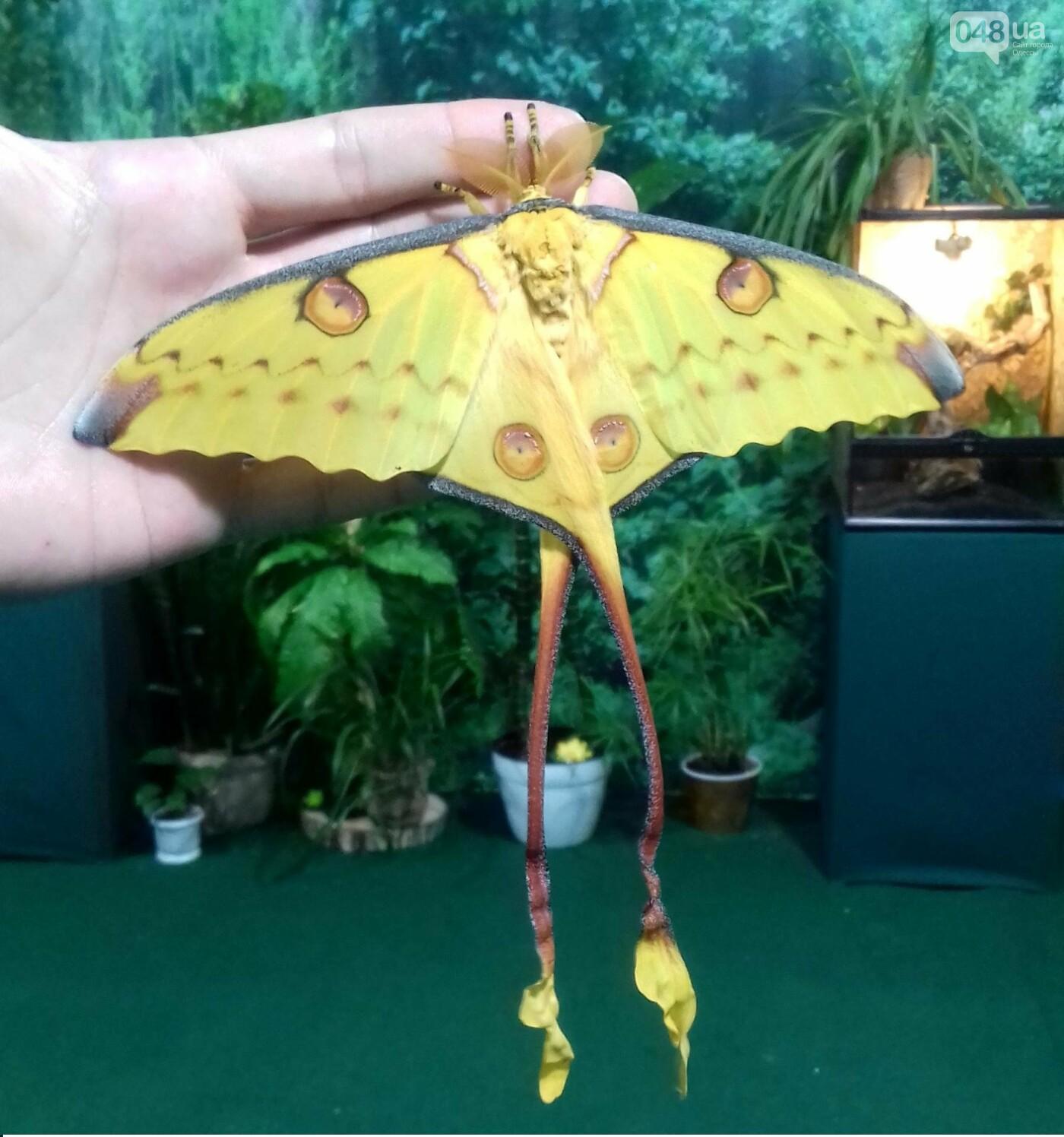 Выставка живых тропических бабочек в Одессе, фото-1