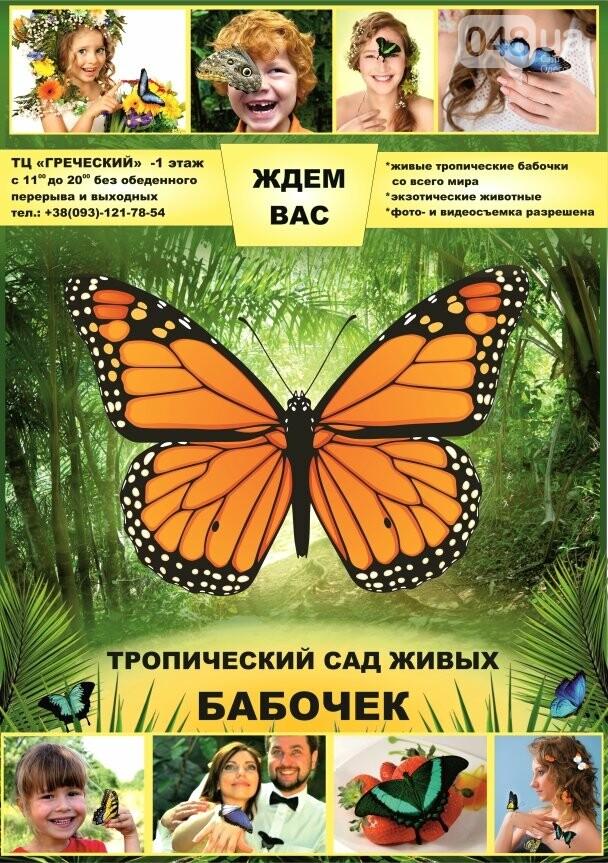 Выставка живых тропических бабочек в Одессе, фото-10