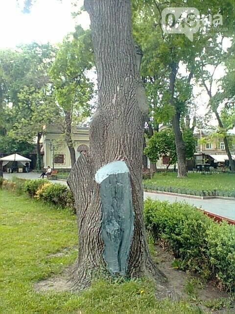 Одесситка прорастила молодые дубы из желудей, собранных в Горсаду, - ФОТО, фото-1
