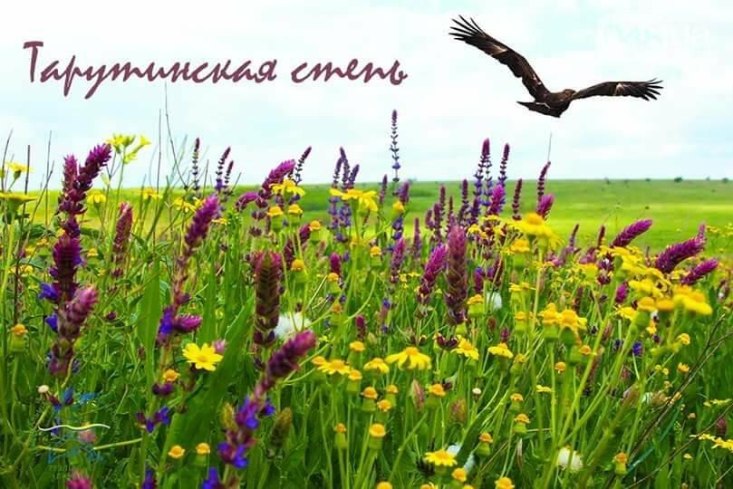 В Одесской области появится еще один заповедник, - ФОТО, фото-1