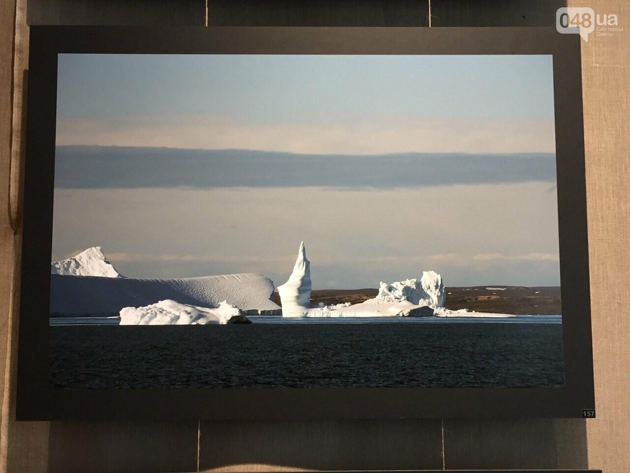 Арктическая сага: На фотовыставке в Одессе можно помочь детям, - ФОТО, ВИДЕО, фото-12