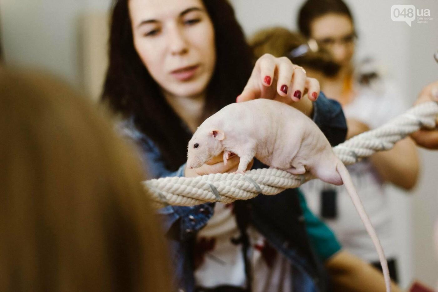 Канатоходцы, бегуны и модники: в Одессе крысам устроили необычный конкурс, - ФОТО, фото-1