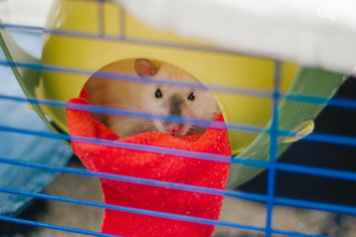 Канатоходцы, бегуны и модники: в Одессе крысам устроили необычный конкурс, - ФОТО, фото-4