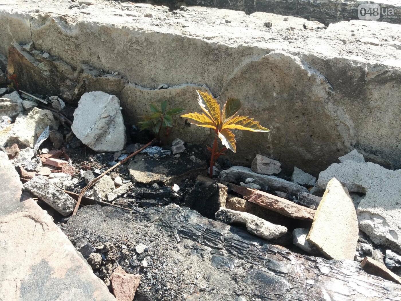 Останки сгоревшего на одесском пляже ресторана не спешат убирать, - ФОТО, фото-10