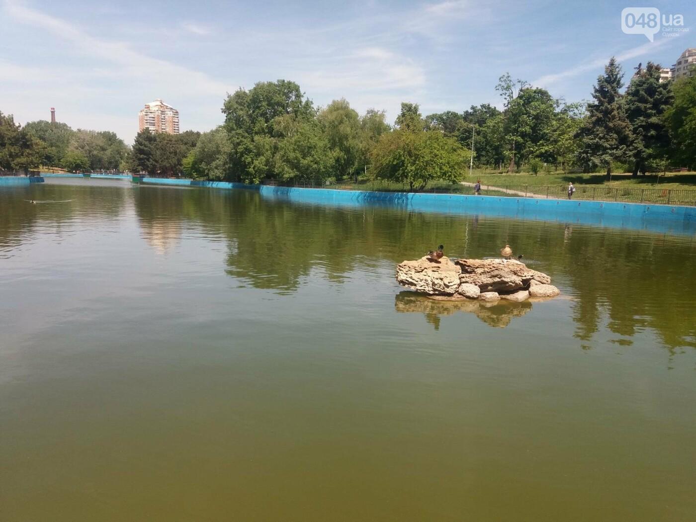 В Одесском парке заполняют водой очищенный пруд и устанавливают «сказочные лилии», - ФОТО, ВИДЕО , фото-3