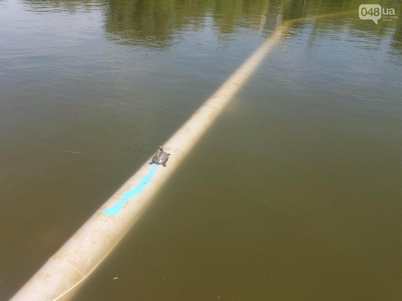 В Одесском парке заполняют водой очищенный пруд и устанавливают «сказочные лилии», - ФОТО, ВИДЕО , фото-2