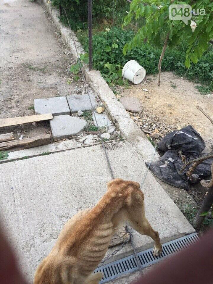 Под Одессой посадили на цепь живой скелет собаки, - ФОТО, ВИДЕО, фото-2