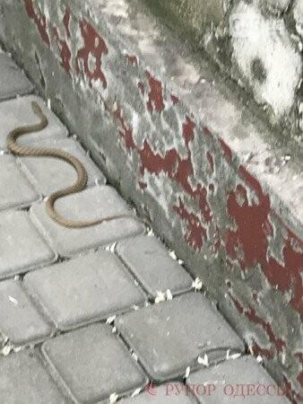 На одесской улице заметили ужей, - ФОТО, фото-1