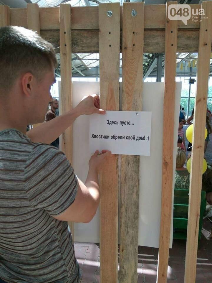 В Одессе прошел добрый фестиваль, на котором множество животных из приютов обрело новый дом, - ФОТО , фото-1