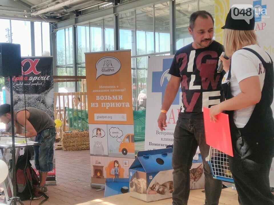 В Одессе прошел добрый фестиваль, на котором множество животных из приютов обрело новый дом, - ФОТО , фото-2