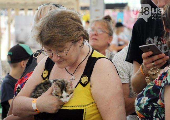 В Одессе прошел добрый фестиваль, на котором множество животных из приютов обрело новый дом, - ФОТО , фото-3