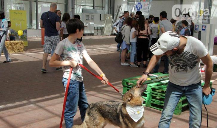 В Одессе прошел добрый фестиваль, на котором множество животных из приютов обрело новый дом, - ФОТО , фото-5