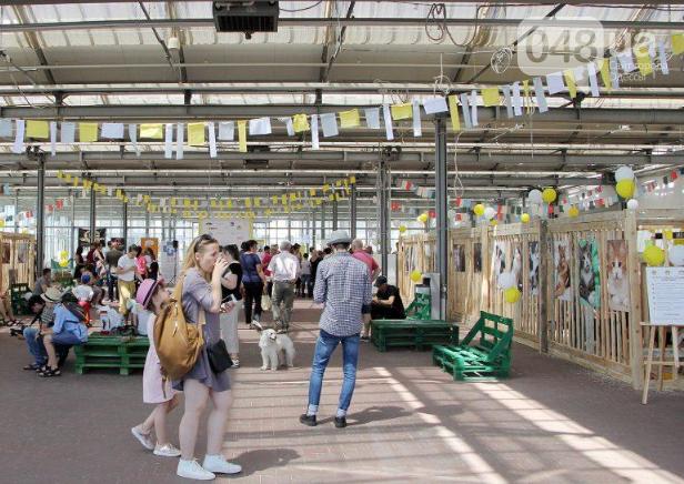 В Одессе прошел добрый фестиваль, на котором множество животных из приютов обрело новый дом, - ФОТО , фото-4