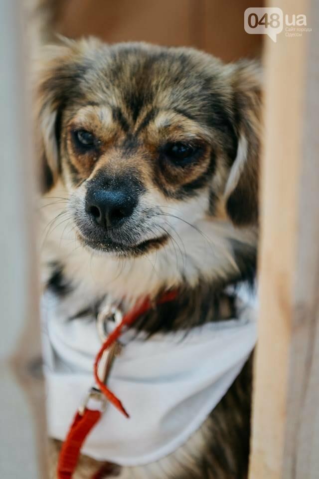 Как одесситы расхватывали животных из приютов: самые трогательные фото, фото-12