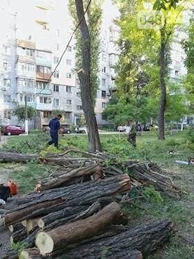 В Одессе война за деревья: Управдом рубит – жильцы вызывают полицию, - ФОТО , фото-1