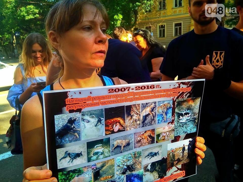 Одесские зоозащитники потребовали у полиции наказать садиста, - ФОТО, ВИДЕО, фото-2