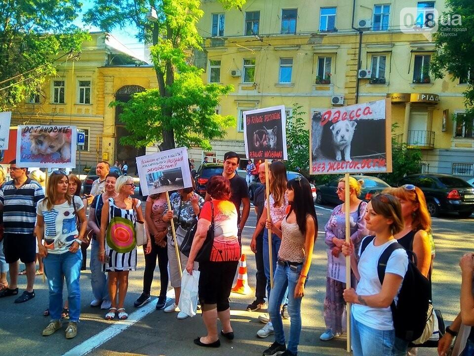 Одесские зоозащитники потребовали у полиции наказать садиста, - ФОТО, ВИДЕО, фото-3