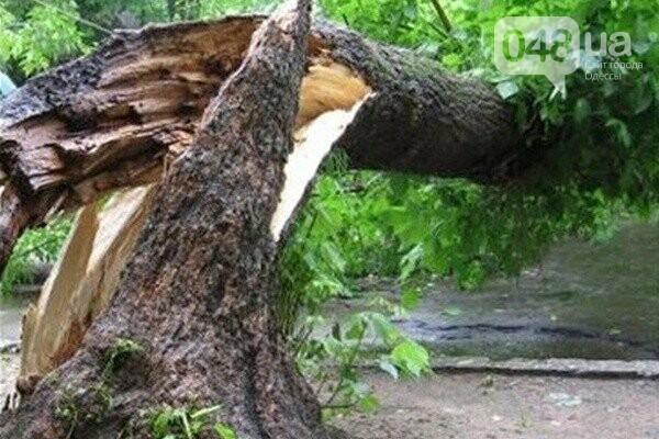 В Одессе дерево раздавало сразу две машины, фото-1
