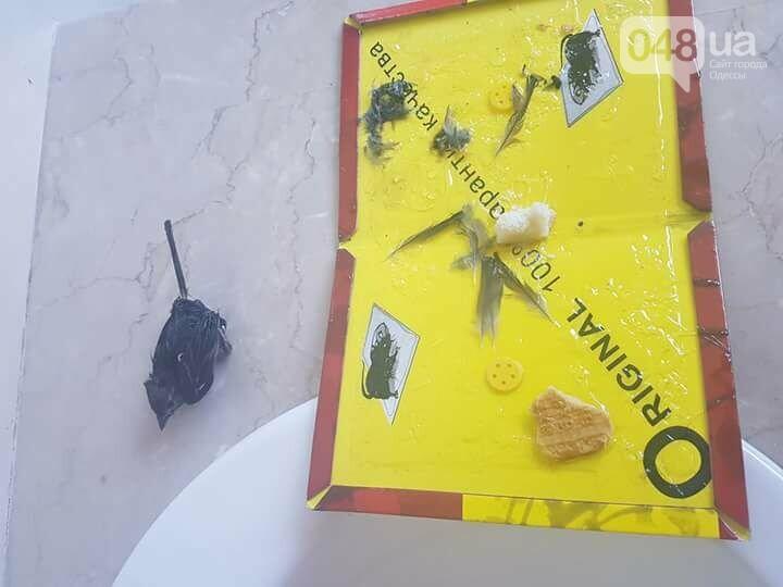 Одесский супермаркет «завязал» с живодерством: на долго ли, - ФОТО , фото-2