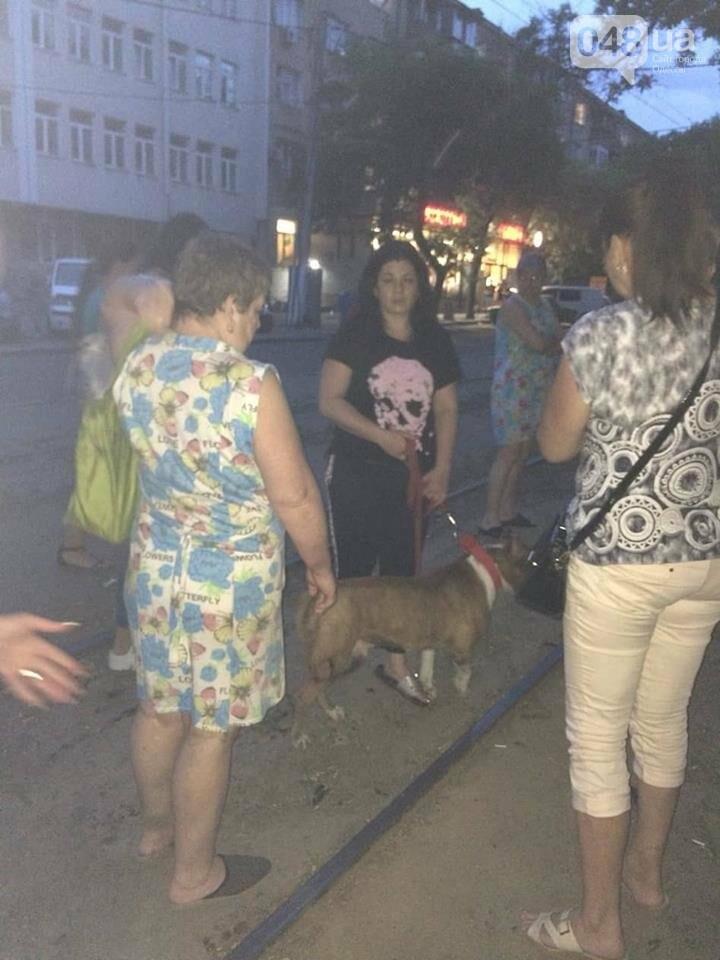 В Одессе бойцовская собака, которая ранее напала на девочку, порвала хаски, - ФОТО, фото-1