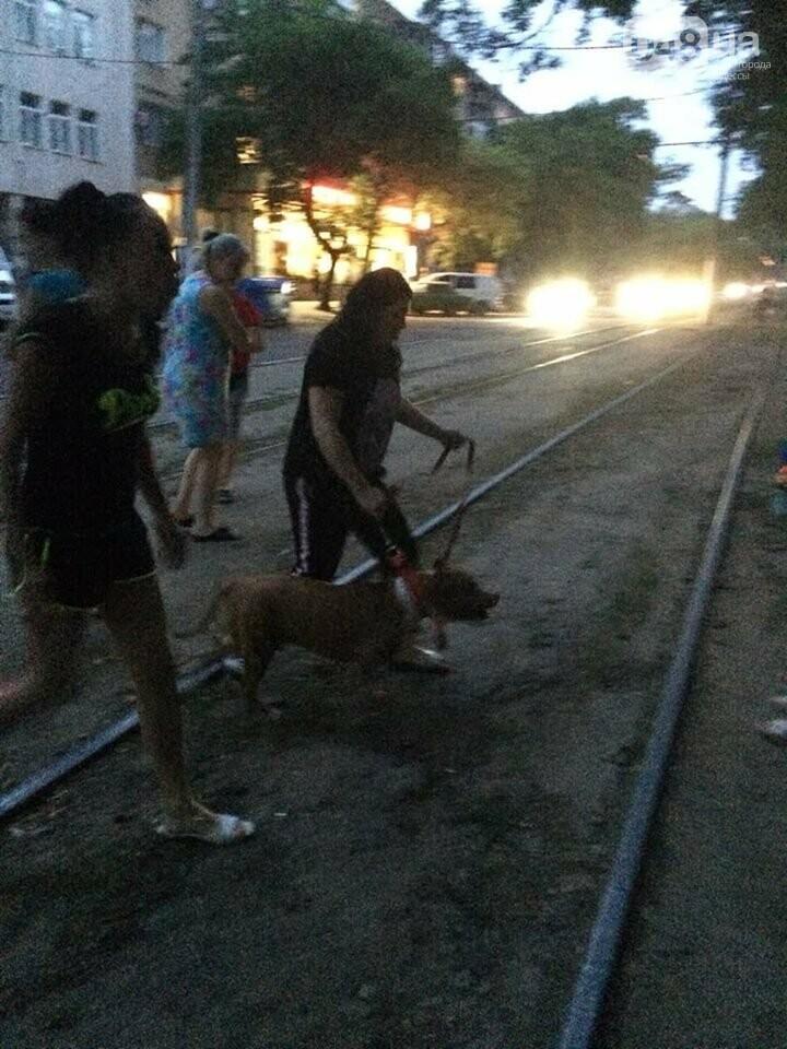 В Одессе бойцовская собака, которая ранее напала на девочку, порвала хаски, - ФОТО, фото-2
