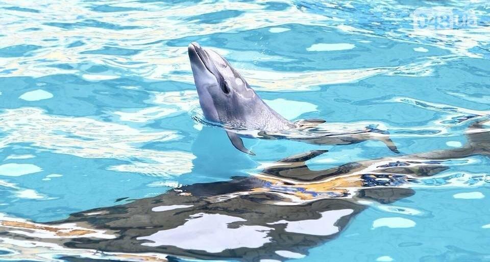 В одесском дельфинарии рассказали, почему беременная самка находилась на представлении, - ВИДЕО, фото-1