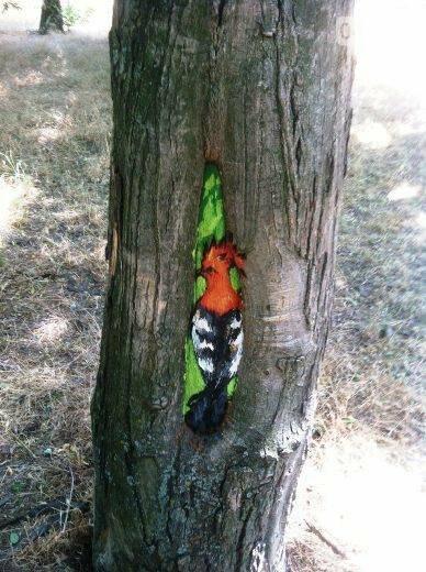 В дуплах деревьев в Одессе появились нарисованные совы, лисицы и еноты, - ФОТО, фото-5