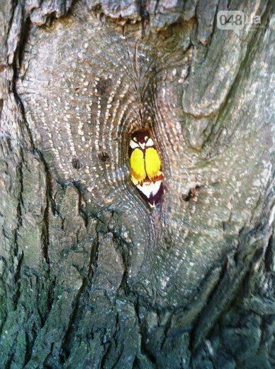 В дуплах деревьев в Одессе появились нарисованные совы, лисицы и еноты, - ФОТО, фото-6