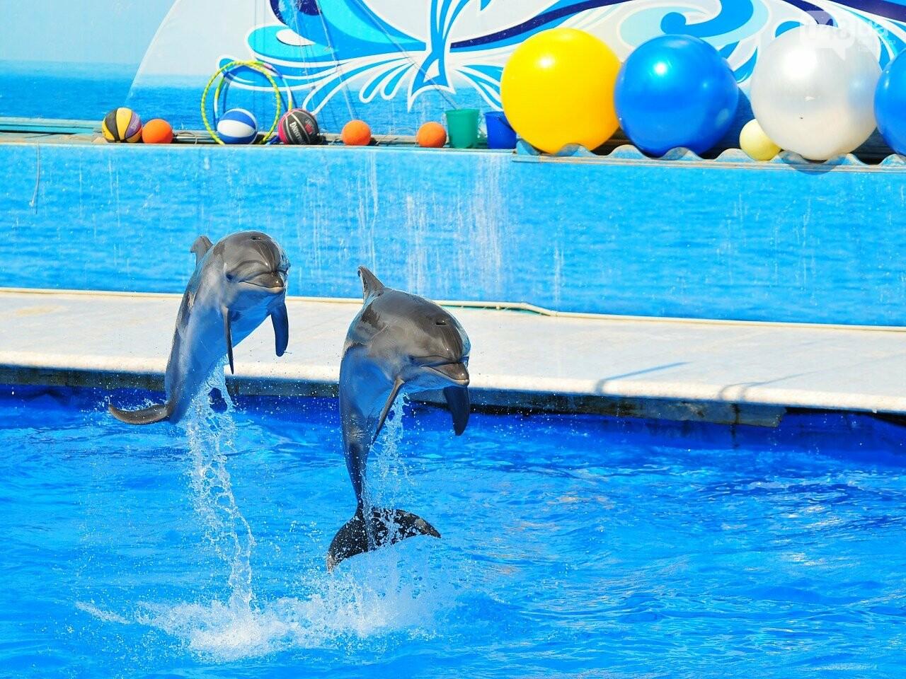 СМИ:  в одесском дельфинарии дельфиниха утопила своего малыша, - ФОТО, фото-3