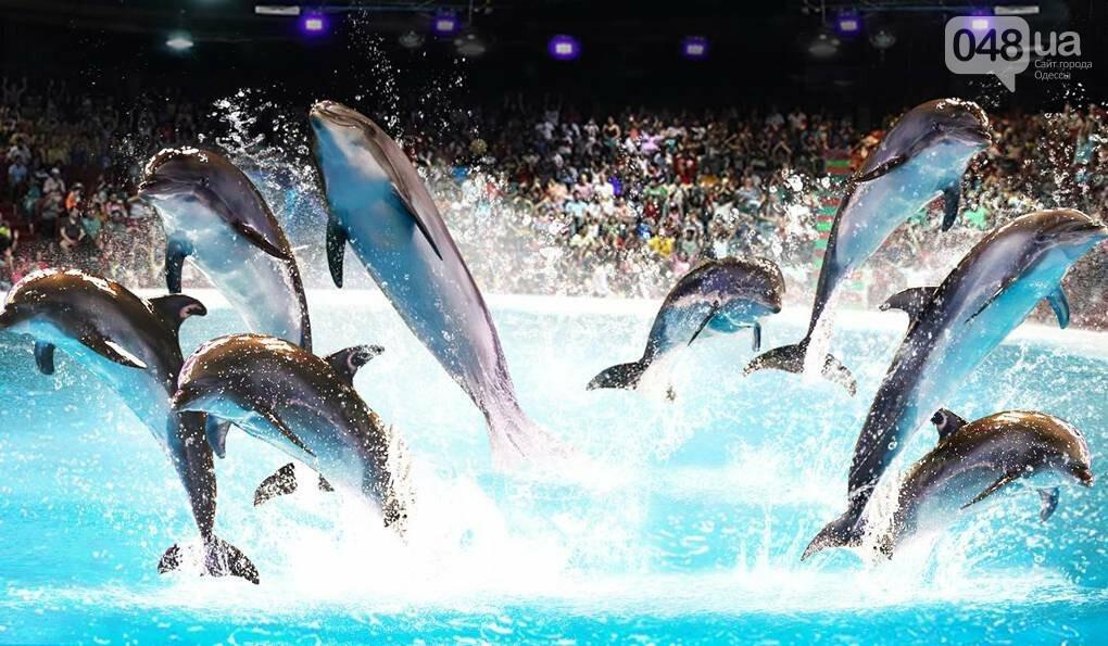 СМИ:  в одесском дельфинарии дельфиниха утопила своего малыша, - ФОТО, фото-2