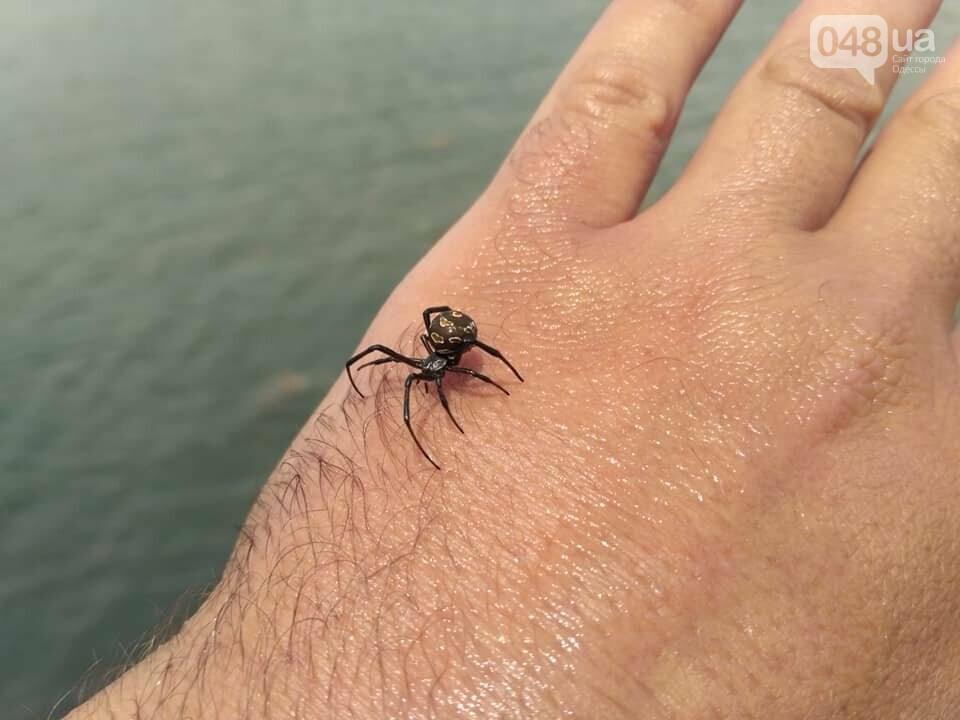 На пляже под Одессой поселилась черная вдова, - ФОТО, фото-2