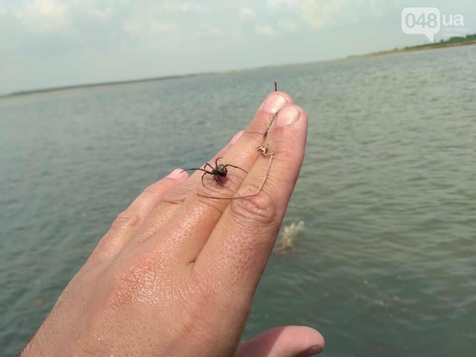 На пляже под Одессой поселилась черная вдова, - ФОТО, фото-3