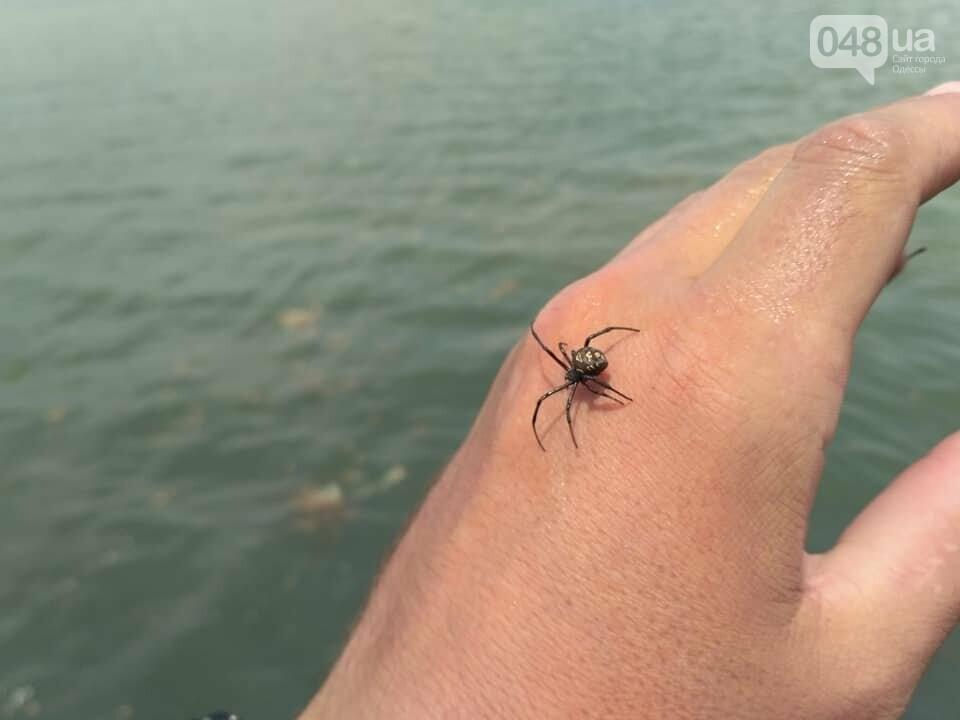 На пляже под Одессой поселилась черная вдова, - ФОТО, фото-4