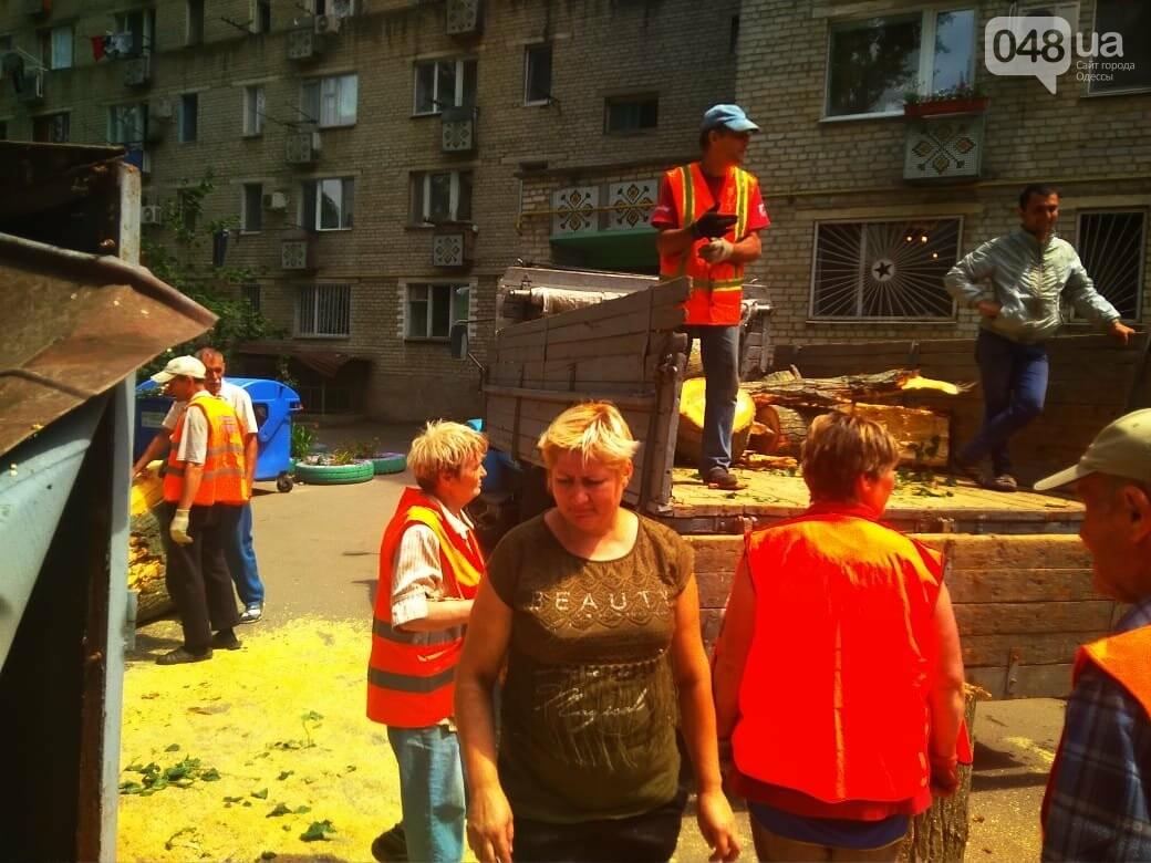 Одесские автомобилисты еще не знают, что их машины проломил тополь, - ФОТО, ВИДЕО, фото-1