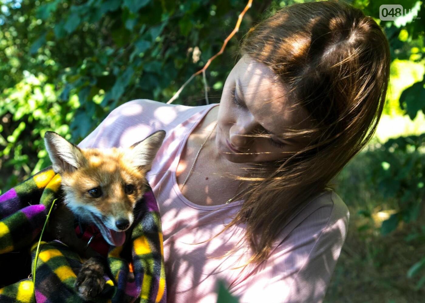 Под Одессой на волю выпустили лисенка, которого собирались отдать на растерзание собакам, - ФОТО, фото-2