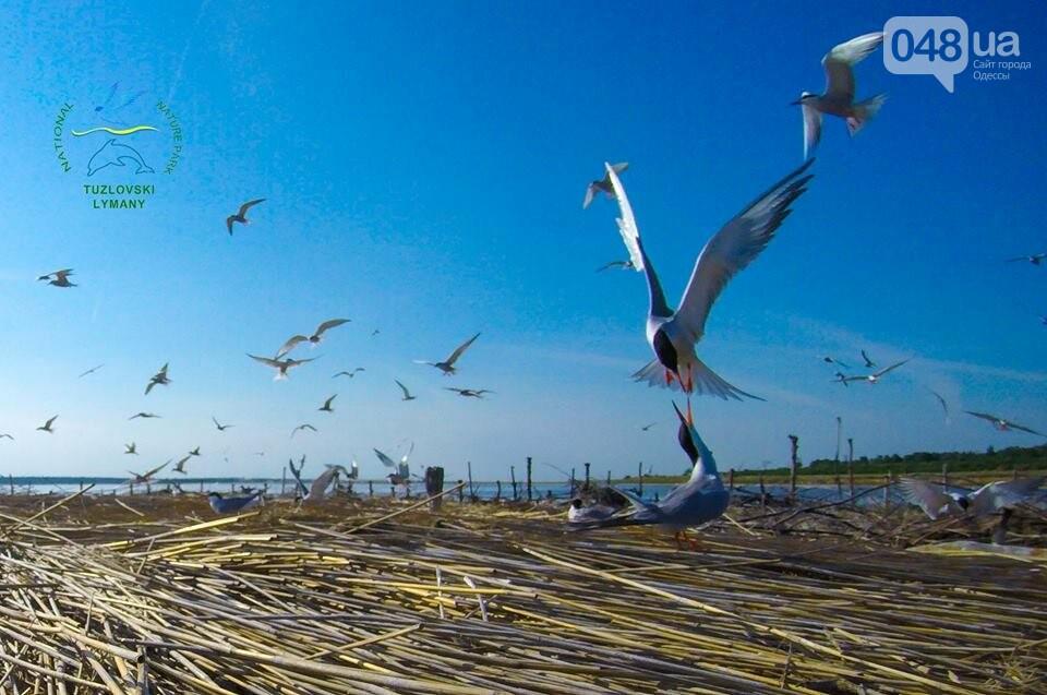 Под Одессой строят острова для птиц, - ФОТО , фото-2