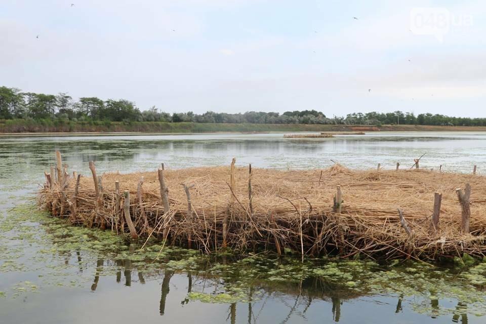 Под Одессой строят острова для птиц, - ФОТО , фото-3