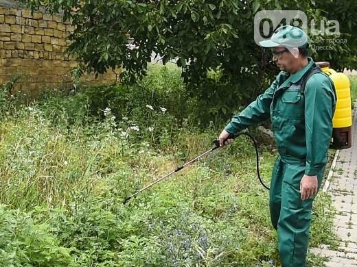 В Одессе появились пушки для борьбы с амброзией, - ФОТО, фото-1