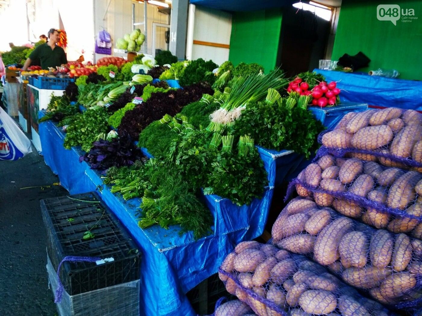 Ищем, где дешевле в Одессе: обзор цен на продукты на рынках Котовского, - ФОТО, ИНФОГРАФИКА, фото-8