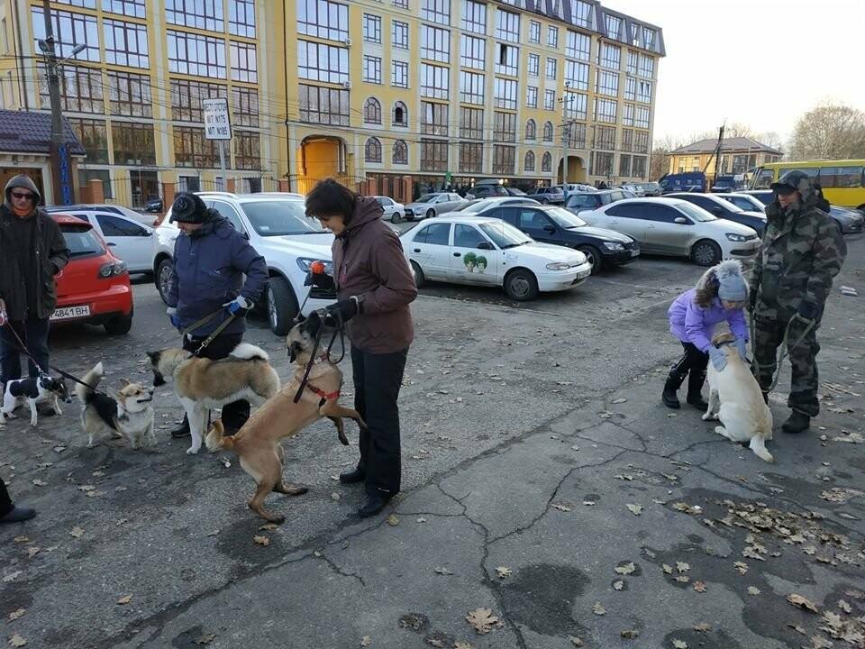 Активисты отвоевывают незаконно захваченный участок одесского парка, - ФОТО, ВИДЕО , фото-12