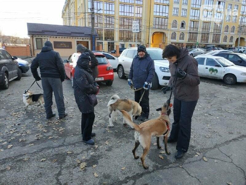 """Страсти по """"Догтауну"""": одесский городской совет против активистов, - ФОТО, ВИДЕО, фото-10"""