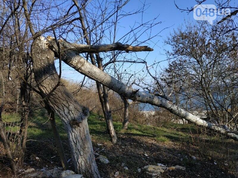 Разгром Чкаловского пляжа в Одессе: что произошло и кому это нужно, - ФОТО, фото-13